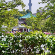 穏やかな初秋の上野公園です 其の6