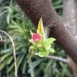 3月15日(木)のつぶやき