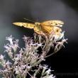 黄昏「アザミ食堂」に集う虫たち-2