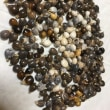 風船カズラ、数珠玉の種