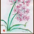 寒風の中に咲くヒメヒガン花は何だかリリしい