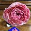 本日のお花はん