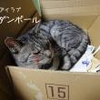 100均の猫好み豆皿