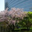 「春・さくら、咲クヤ at 百段階段」/目黒雅叙園