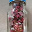 桜茶NO3
