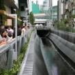 渋谷川を歩く