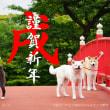 秋田犬の画像を公開