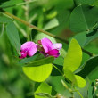 萩の花が咲きました、シオカラトンボ、スズメバチが巣作り中。きょうの一句は「夏雲」