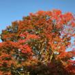 有馬温泉に紅葉を見に行った