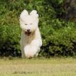 ●やっと!撮った飛行犬・・・