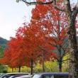 ふれあいスポーツランドの紅葉状況・・・鹿児島の風景