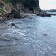 釣り場の下見(三戸浜堤防)