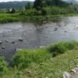 長良川郡上鮎の友釣り