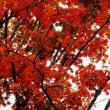 五稜郭公園・紅葉