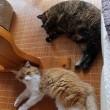 女子ネコの寝相
