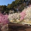 大縣神社の梅まつり