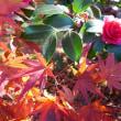 播州で晩秋を満喫........