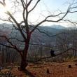 木登り練習と枯れ枝撤去