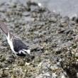 護岸の岩場に集まる鳥たち