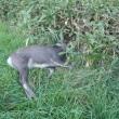 狩猟前練習と平成29年度狩猟解禁