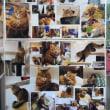 こだいらの猫(=^・^=)たち・・ 猫の譲渡会ショッピングセンターで行われました!