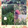 ガーデン♪