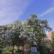 Atlanta Botanical Garden アトランタ ボタニカル ガーデン