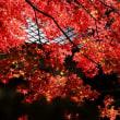 広寿山の紅葉