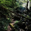 内子町の小田深山渓谷でも新緑が始まっています (その1)