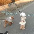 二足歩行で歩く犬♪
