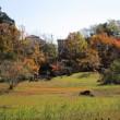 実籾本郷公園でカワセミを見た