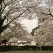 桜の弘前公園