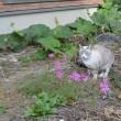 秋桜と猫 お笑いライブ