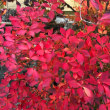 日帰りバスツアーで紅葉を満喫…