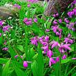 『季節の色』 紫蘭