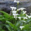薫風の候 海蔵寺の花々