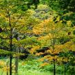 花の端境期の神代植物園へ