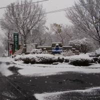 昨夜から雪が積もりました