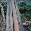 鋸山登山道の橋