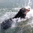 犬かき下手すぎて溺れる犬