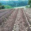 ジャガイモとラッキョウ ニンニクを植えました。