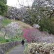 今日の城山公園
