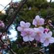 天城山/大人の休日(H30/2/17-voy80/100)