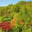 2017年9月22日 北八甲田 睡蓮沼 周辺の紅葉