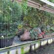 京都北山植物園『ボタニカルウインドウ』