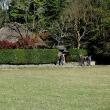 嵯峨野散歩 11月13日(3)
