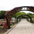 5月万博公園のルピナス・ばら