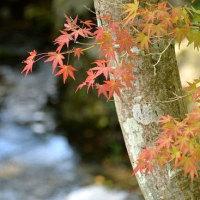4267 色づく木の葉