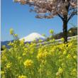富士山&春めき桜,菜の花