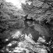 青葉若葉の池